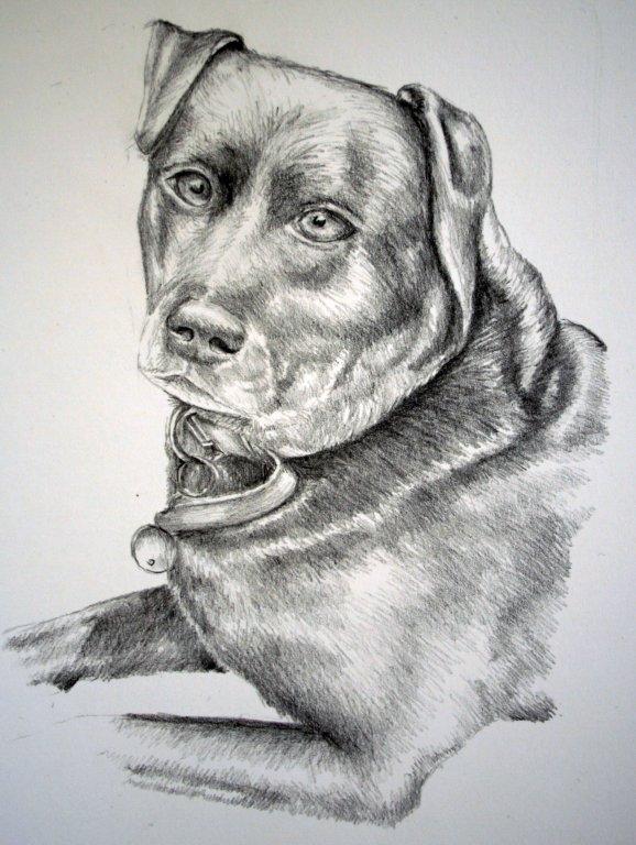 Lisa\'s friend\'s dog (2012)